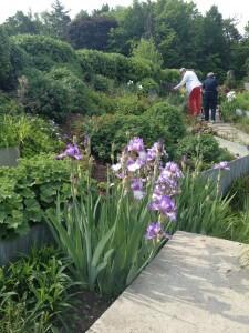 Edwards garden flowers